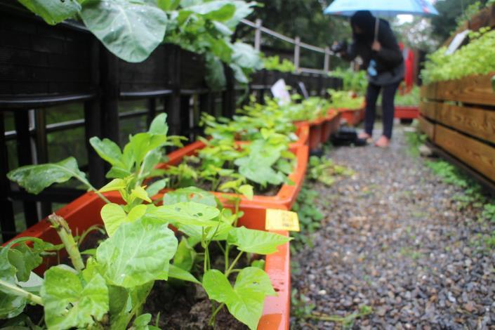 北市「社區園圃推廣補助計畫」幫您打造社區後花園 (1)