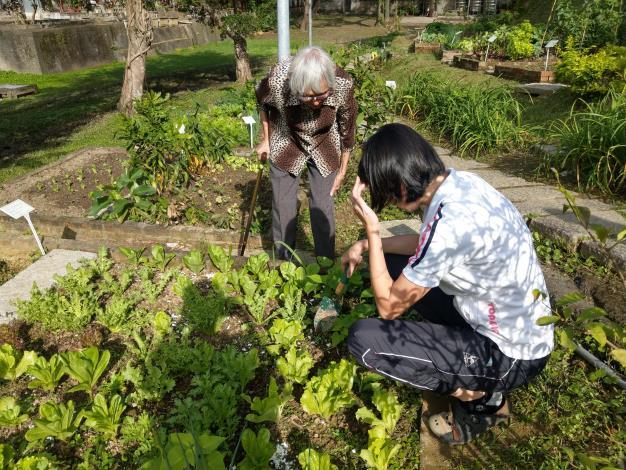 北市「社區園圃推廣補助計畫」幫您打造社區後花園 (3)