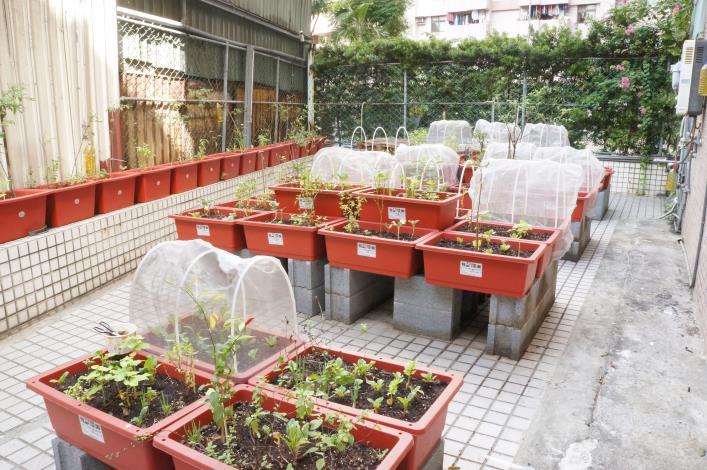 北市「社區園圃推廣補助計畫」幫您打造社區後花園 (6)