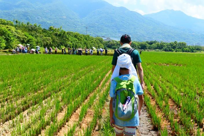 水稻 (3)