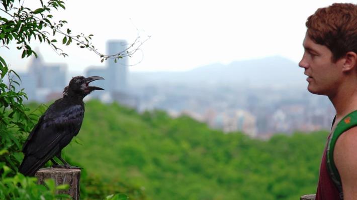 倘佯山林間除了可欣賞美景,還可以看到各式各樣生態景觀.JPG
