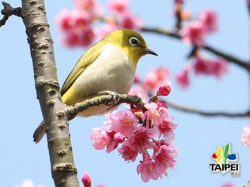 陽明山花季 陽明公園
