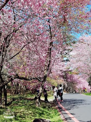 1080210-0211正聲里武陵農場賞櫻新春睦鄰旅遊