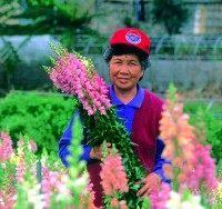 花農喜收成果