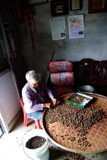 農民製茶照片