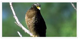 區動物:大冠鷲 (圖片引用自東北角暨宜蘭海岸國家風景區全球資訊網)