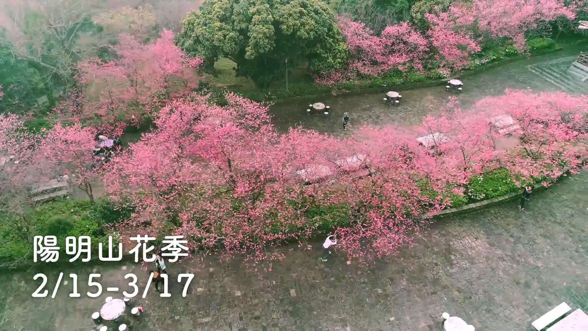 【市政宣導】臺北花季活動宣傳影片