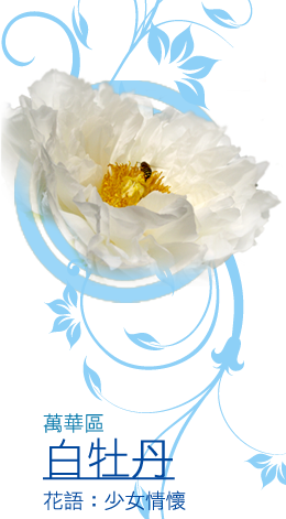 萬華區區花--白牡丹