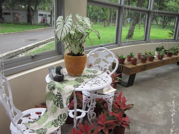 居家佈置示範---彩葉芋