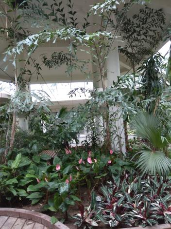 彩葉植物增添造景色彩