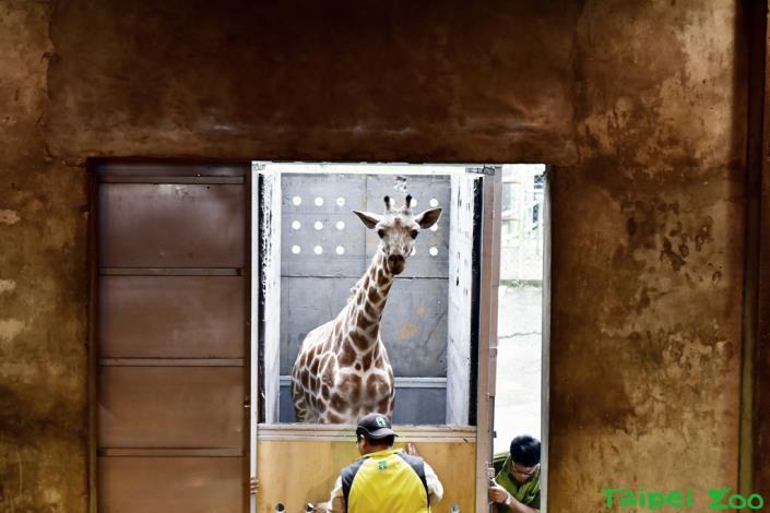 「宵璋」順利抵達新竹六福村野生動物園