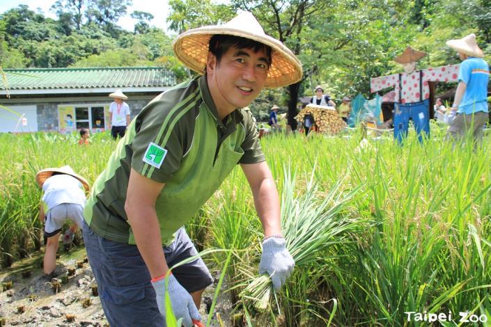 園長也下田與學員們一同割稻