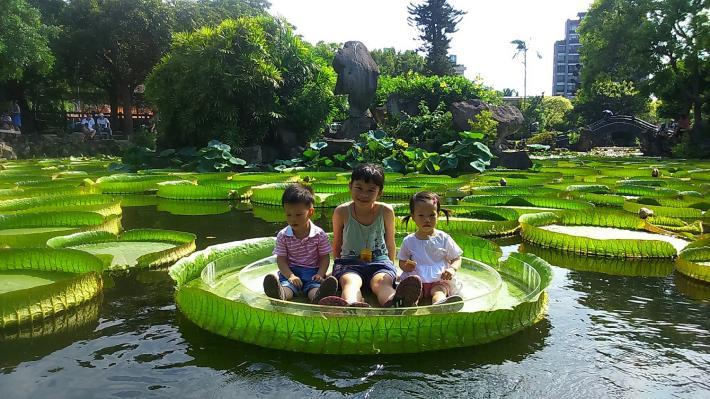 圖1. 雙溪公園大王蓮乘坐活動受到小朋友熱烈歡迎