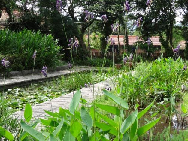 圖1.看起來就很清涼的水生植物展生態水池