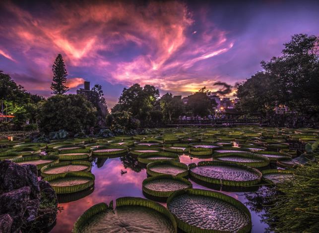 圖2. 「彩雲飛」作品呈現雙溪公園尼莎颱風侵颱前的天空雲彩攝自周秀娟