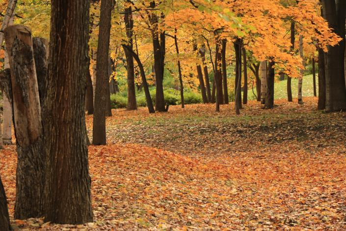圖1._帶您走進森林療癒的世界。[開啟新連結]