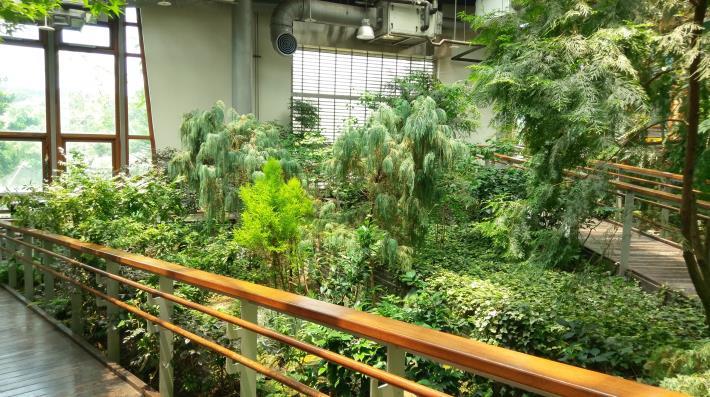 圖6._如同森林縮影,臺北典藏植物園一隅(三)。[開啟新連結]