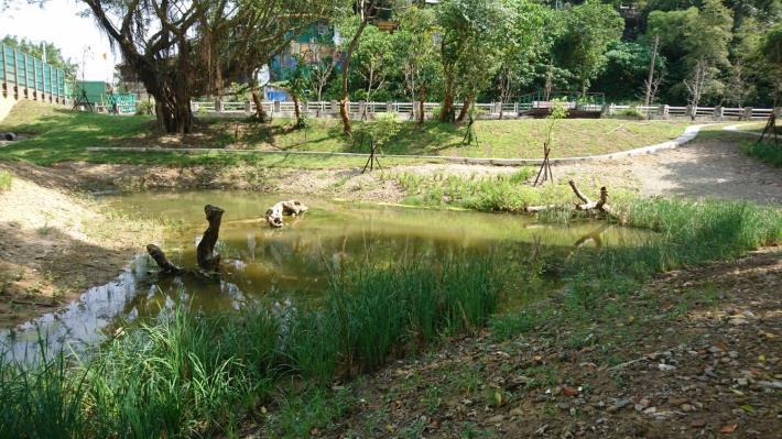 公園一景 – 生態池,回復過去永春陂風貌的起點。