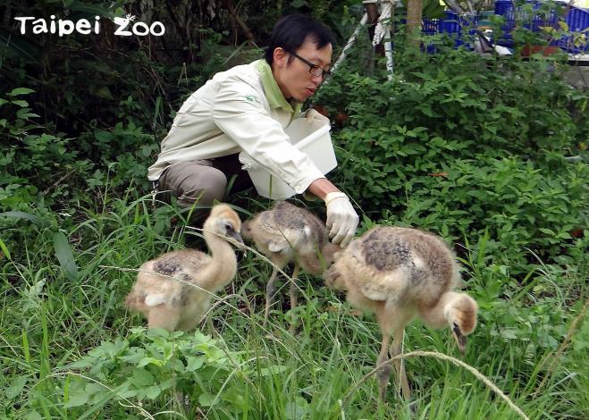 保育員照養幼雛所付出的關愛不亞於親鳥,只能說是有過之而無不及呦!