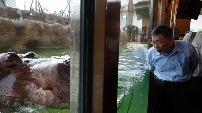 柯文哲市長與河馬「娜竹忠忠」面對面