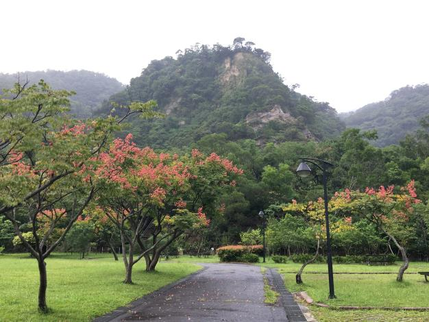 具有四季風情的台灣欒樹