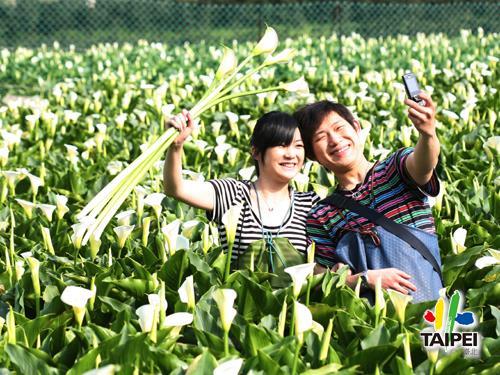 Calla Lily _ Yangmingshan Zhuzih...