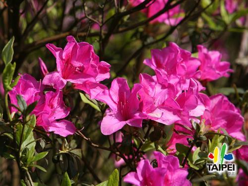 Yangmingshan Flower Festival _ Y...
