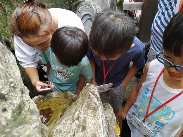 觀察水生生態