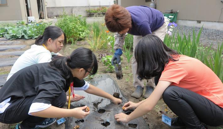 圖4在青森縣平川市農家進行球根花卉栽種實作學習.JPG