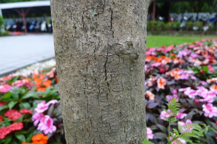 圖2:莖幹有明顯的裂紋.JPG[開啟新連結]