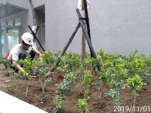 10811-植栽工程施作