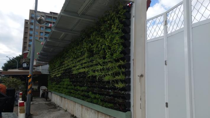 10812-綠籬