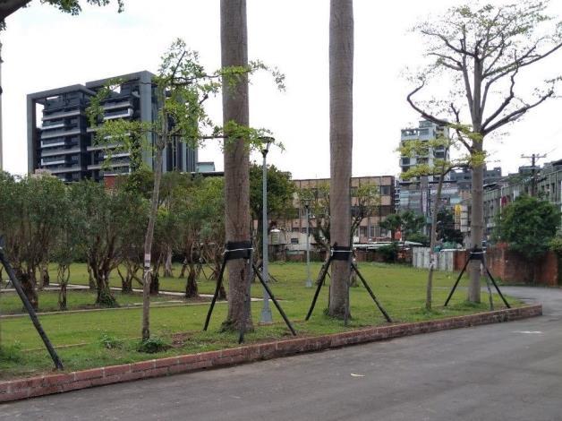 10904-萬隆東營區社會福利設施用地新建工程-植栽移植工程第二次斷根施工-1