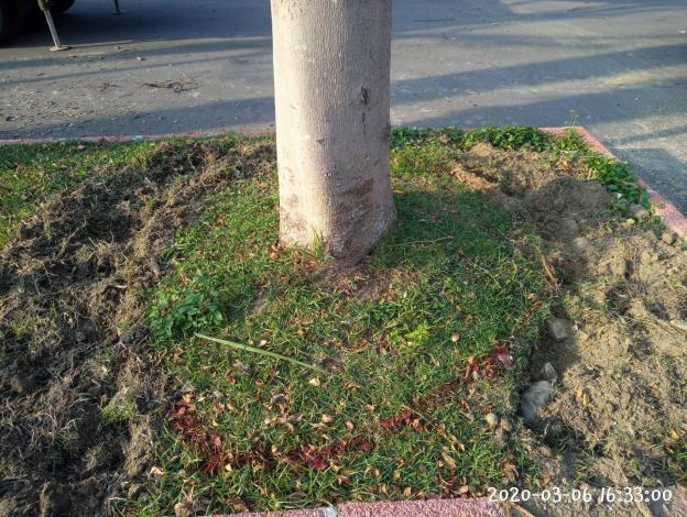 10903-萬隆東營區社會福利設施用地新建工程-植栽移植工程第一次斷根施工
