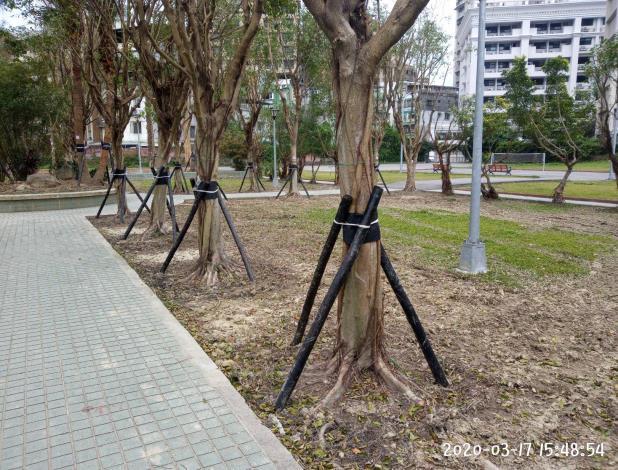 10903-萬隆東營區社會福利設施用地新建工程-植栽移植工程支架固定
