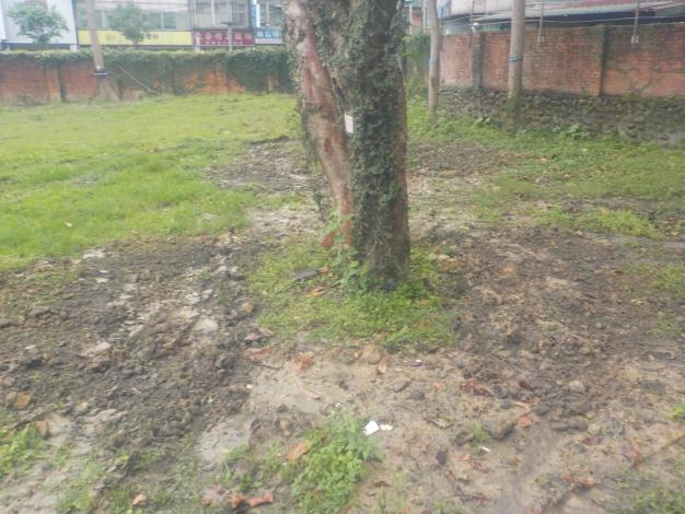 10904-萬隆東營區社會福利設施用地新建工程-植栽移植工程第二次斷根施工-2
