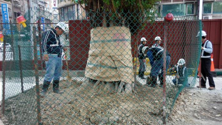 樹木保護作業
