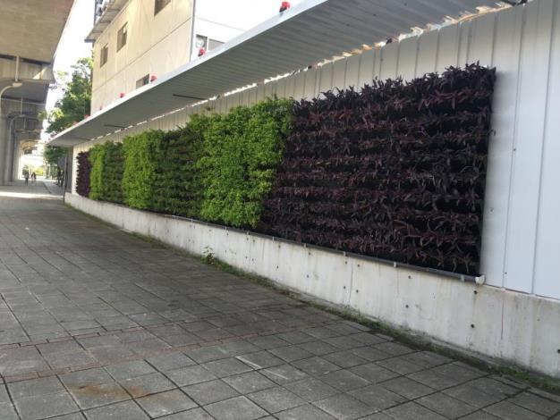 圍籬綠美化