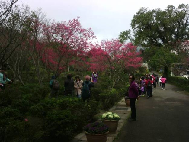花卉中心的山櫻花也開了[開啟新連結]