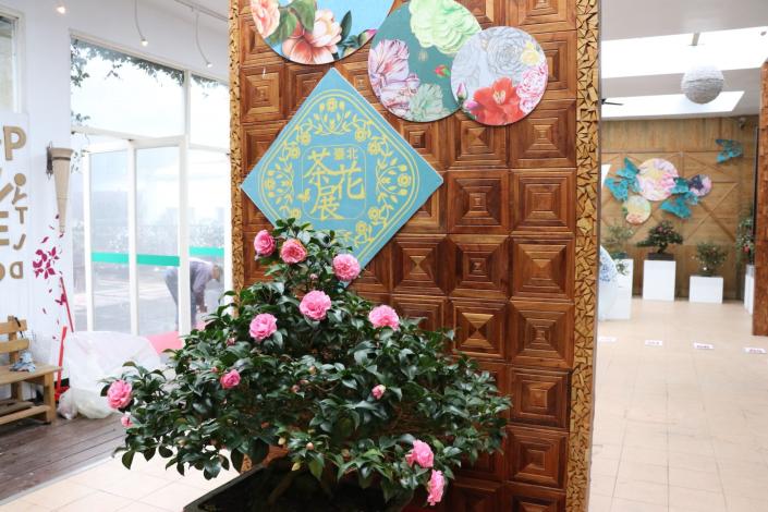 展場內展示珍貴的茶花盆景[開啟新連結]