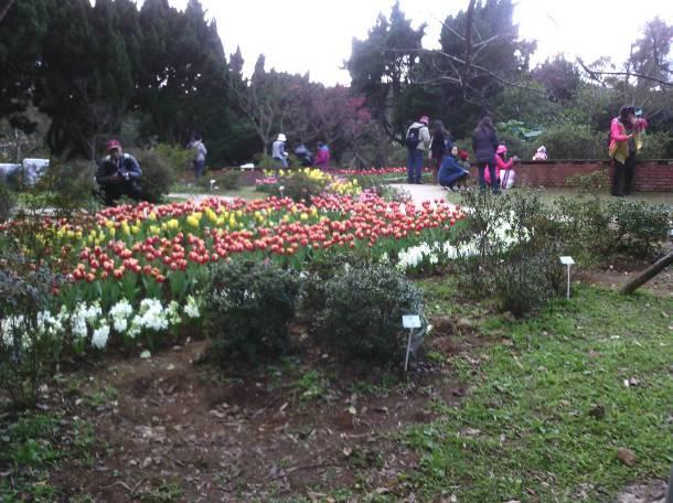 鬱金香和風信子讓園區充滿歐洲風味[開啟新連結]
