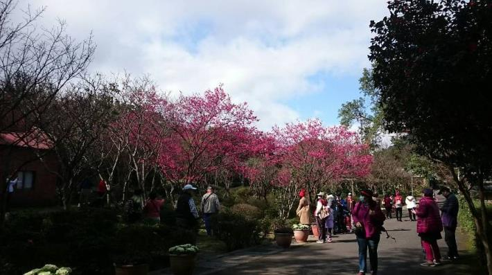園區美麗的山櫻花[開啟新連結]