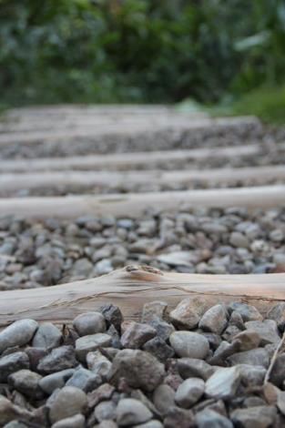 照片06人工搬運、融入環境的自然原木碎石步道