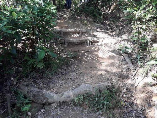 照片14.融入自然環境的手作步道
