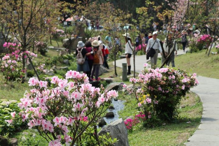 圖22.陽明公園杜鵑花與櫻花齊放 吸引許多民眾前往觀賞