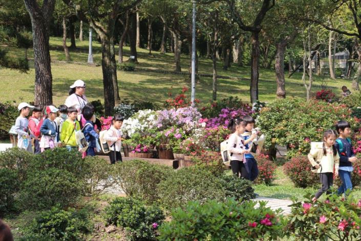 圖15.各式品種杜鵑花綻放 吸引小朋友前來觀賞
