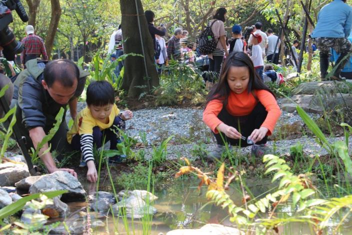 圖七、小朋友神情專注的在野放螢火蟲幼蟲。