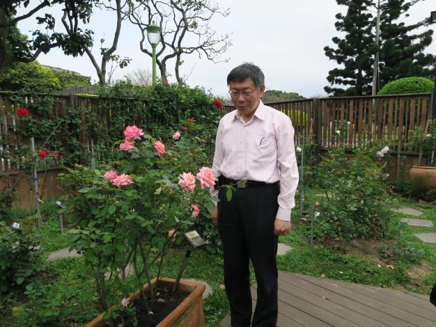 圖5、柯市長專注欣賞玫瑰花之美。.JPG