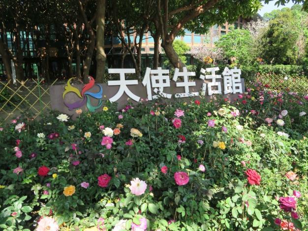 圖9、天使生活館配合春季玫瑰展佈置玫瑰花盆栽。