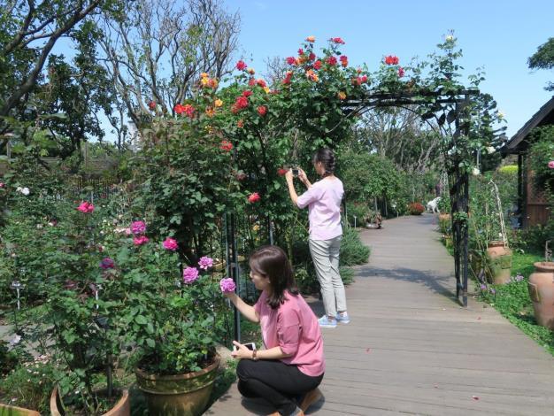 圖1、臺北玫瑰園拱門百花盛開